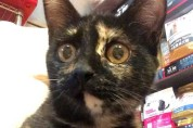 Turtle – A 2 Month Old Sweetie Pie!
