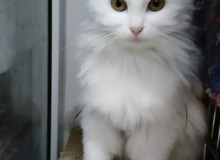 Snow, 1 year old girl