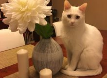 Ghost, a boy cat is looking for new home!