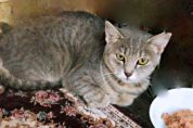 Huihui, a pretty girl looking for foster